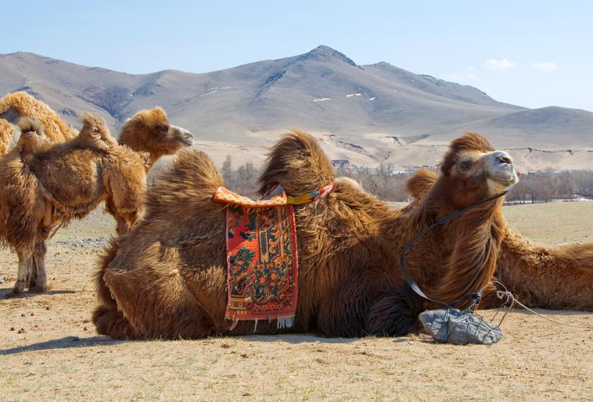 mongolia, deserto del gobi, gobi, mongolia viaggi